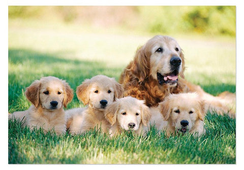 Golden Retriever With Puppies  100-Piece Cardboard Jigsaw Puzzle
