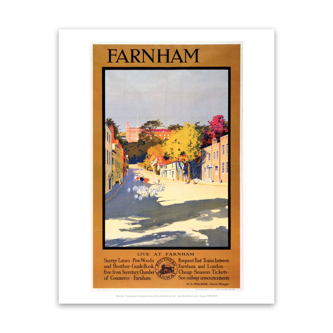 Farnham Sheep Art Print
