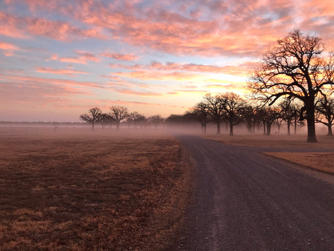 As temperatures begin to change in the fall and spring at the ranch, a blanket of fog often covers the low lying areas at sunrise.