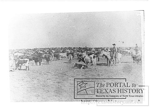 Longhorn herd of cattle resting on the Red River