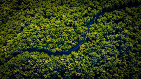 rainforest trees from above