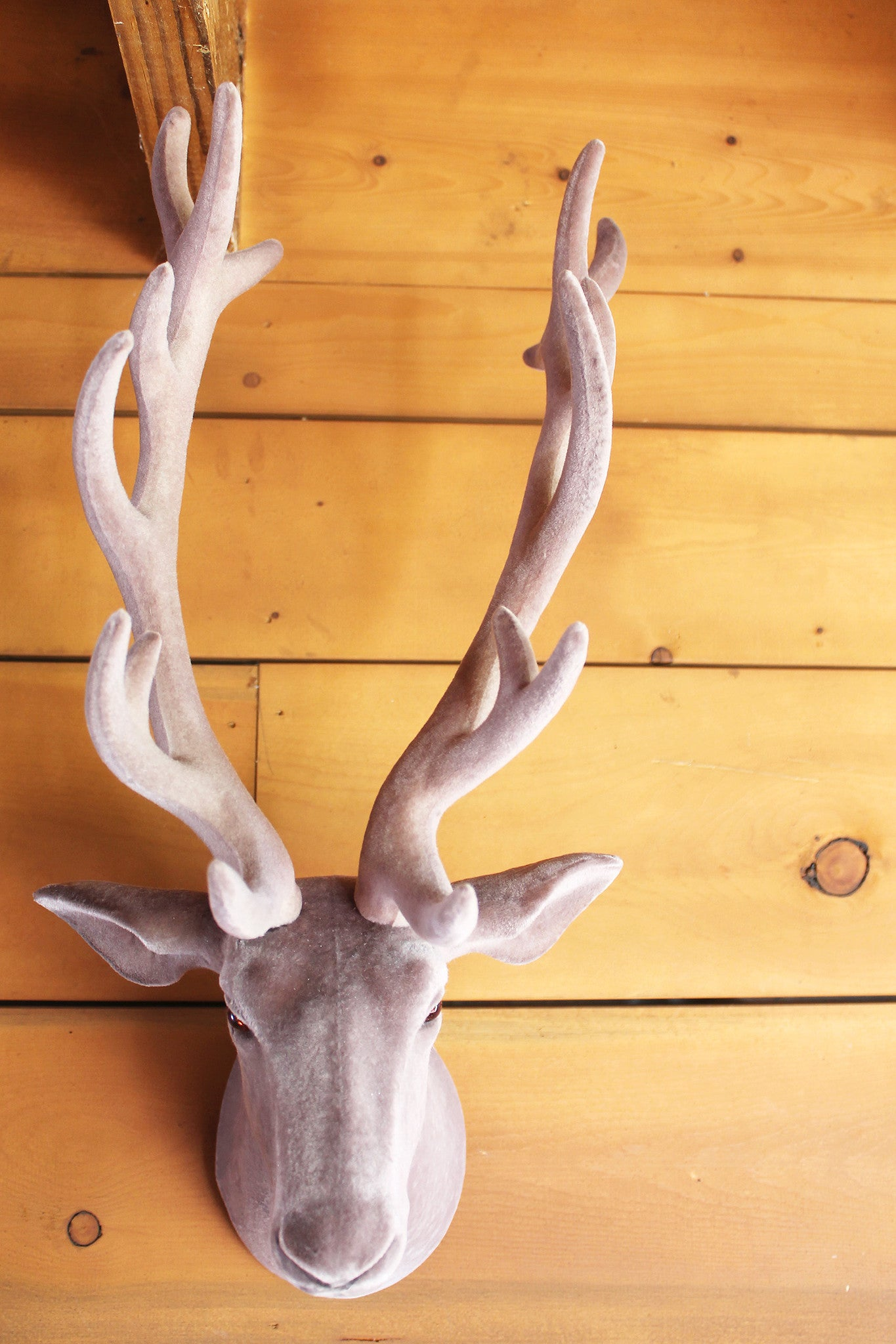 Fine Metal Antlers Wall Art Photos - The Wall Art Decorations . & Perfect Silver Antlers Wall Decor Collection - Wall Art Collections ...