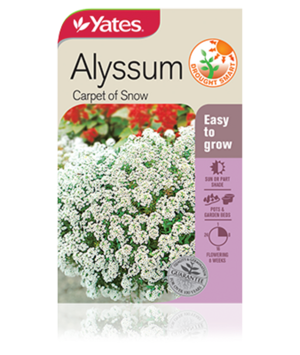 Alyssum Carpet of snow - yatesgardening