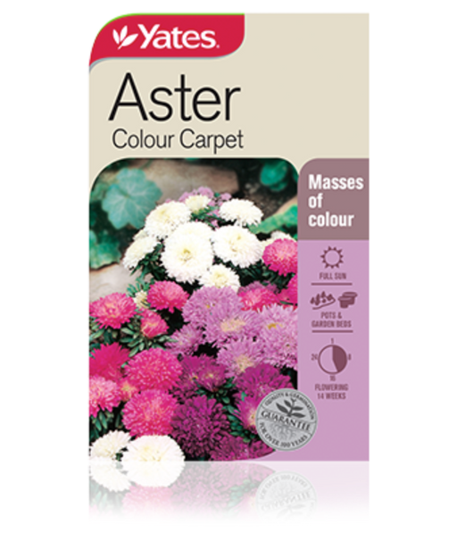 Aster Colour Carpet - yatesgardening