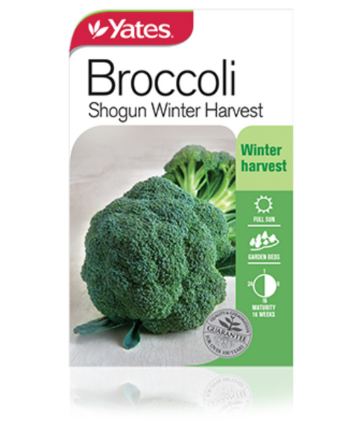 Broccoli Shogun Winter Harvest - yatesgardening
