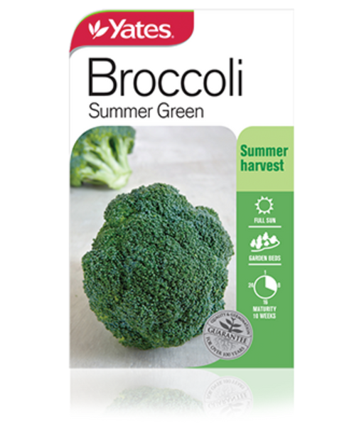 Broccoli Summer Green - yatesgardening