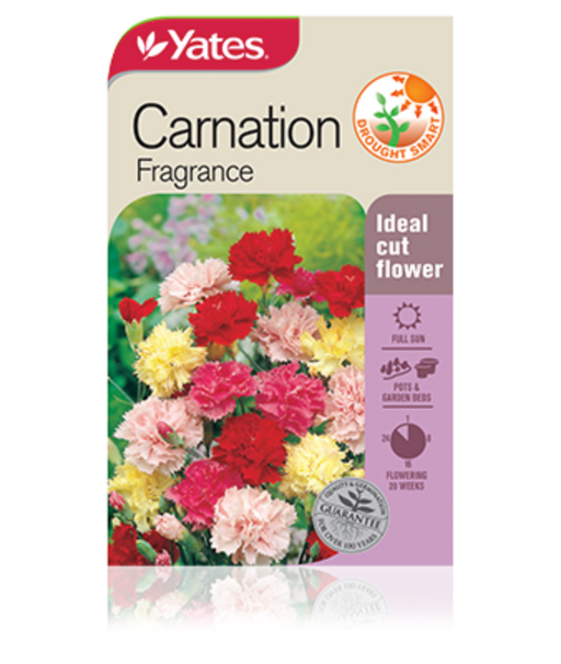 Carnation Fragrance - yatesgardening