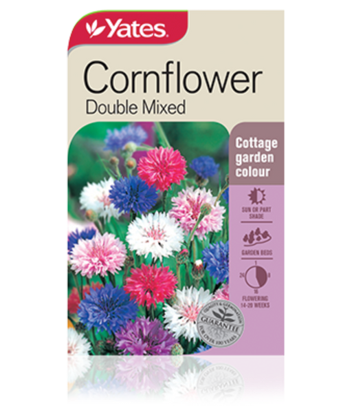 Cornflower Double Mixed - yatesgardening