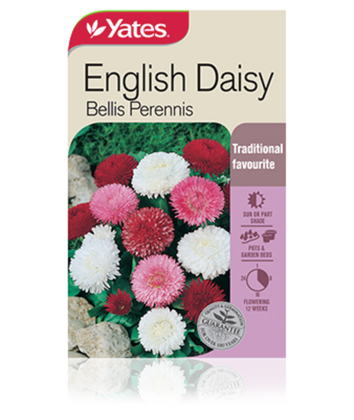 English Daisy - yatesgardening