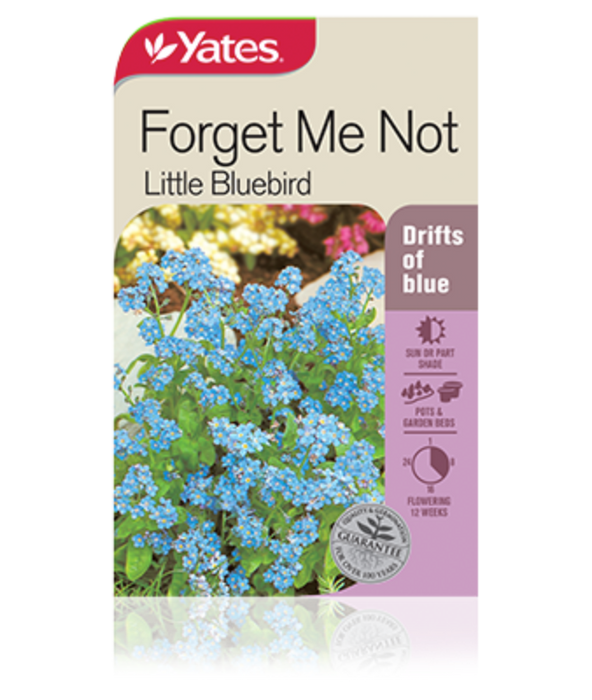 Forget Me Not Little Bluebird - yatesgardening