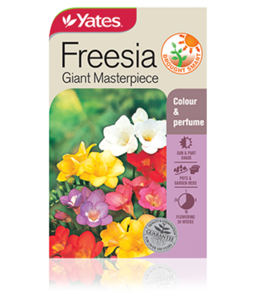 Freesia Giant Masterpiece - yatesgardening