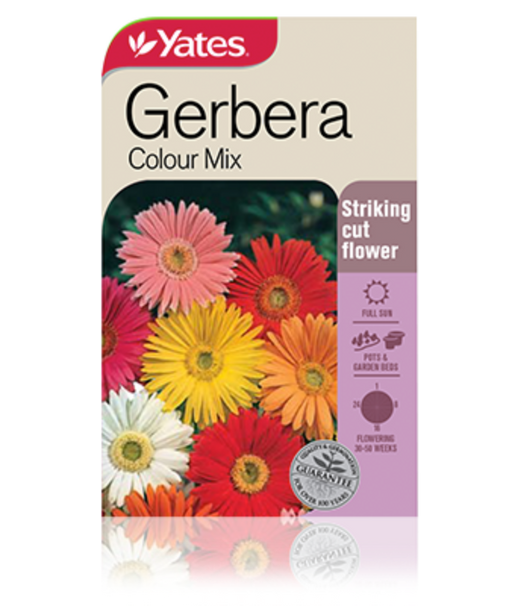 Gerbera Colour Mix - yatesgardening