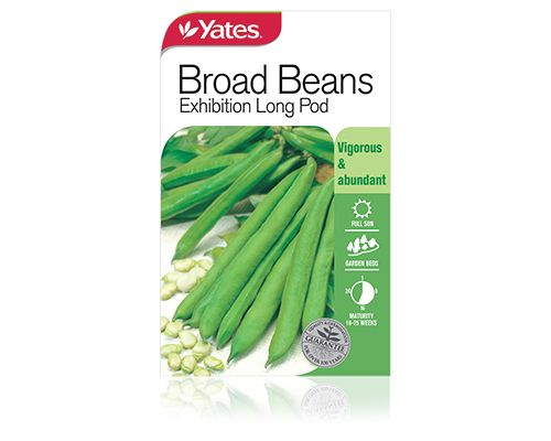 Broad Beans Early Long Pod - yatesgardening