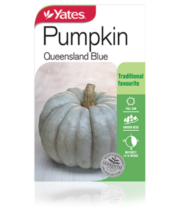Pumpkin Queensland Blue - yatesgardening