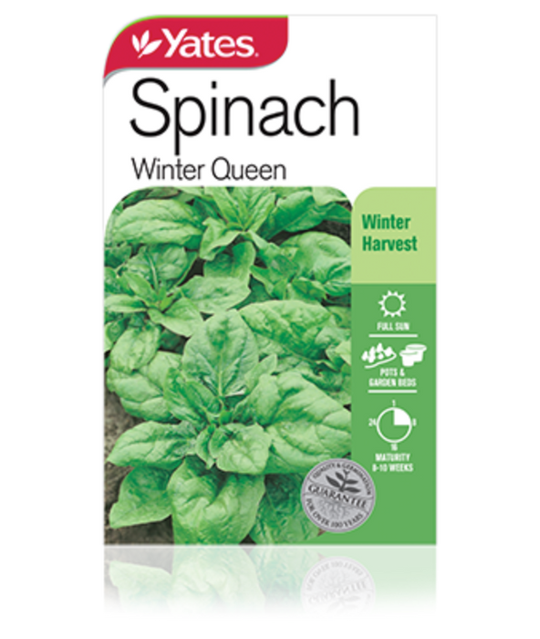 Spinach Winter Queen - yatesgardening