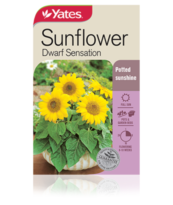 Sunflower Dwarf Sensation - yatesgardening