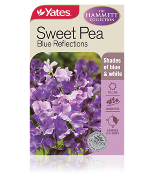 Sweet Pea Blue Reflections (The Hammett Collection) - yatesgardening