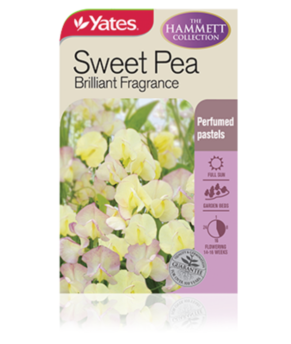 Sweet Pea Brilliant Fragrance (The Hammett Collection) - yatesgardening