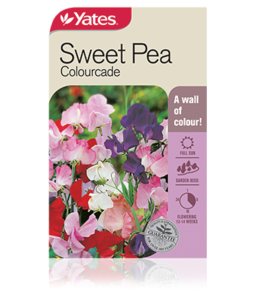 Sweet Pea Colourcade - yatesgardening
