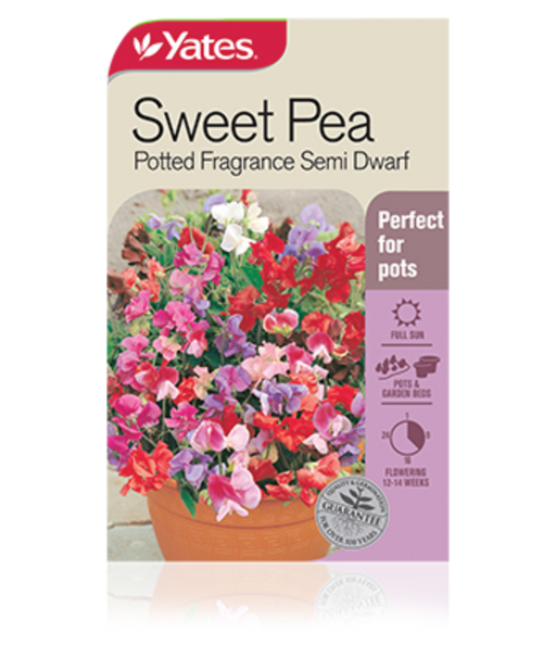 Sweet Pea Potted Fragrance Semi Dwarf - yatesgardening