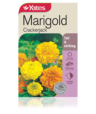 Marigold Crackerjack