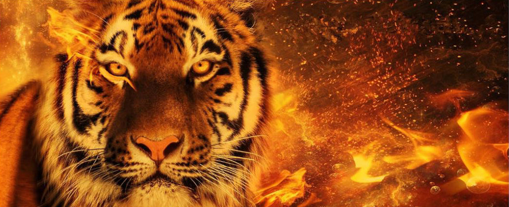 TIGER IN A FIRE
