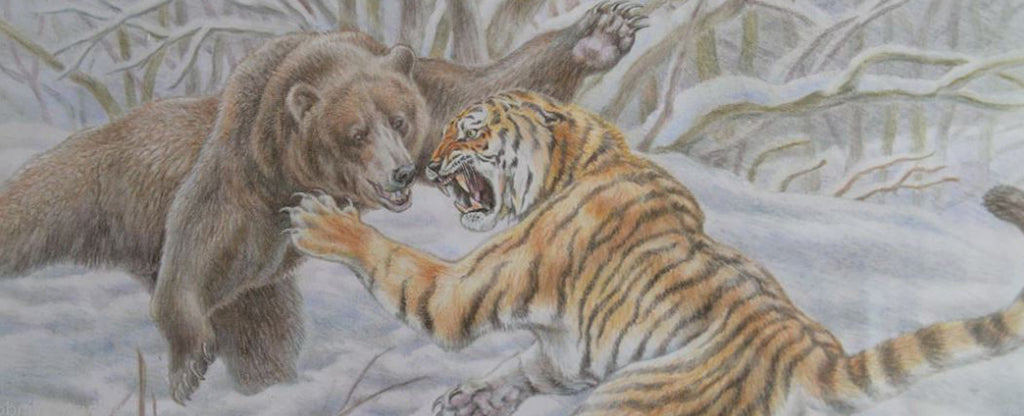 fighting tiger and bear