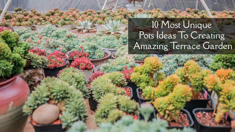 10 Most Unique Pots Ideas to Creating Amazing Terrace Garden