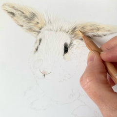 How to draw a rabbit, the layers of fur