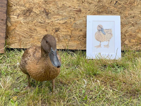 Duck Winner Of Our Competition