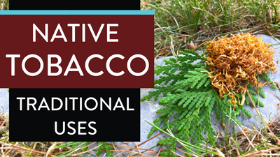 Native Tobacco - Traditional Uses of Tobacco Sacred Medicine