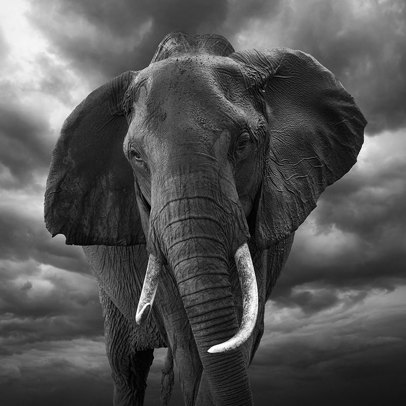 Bjorn Persson wildlife photography limited edition art prints