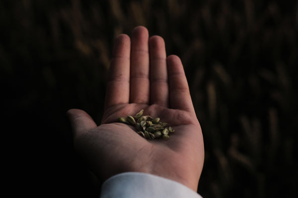 Collect the Seeds