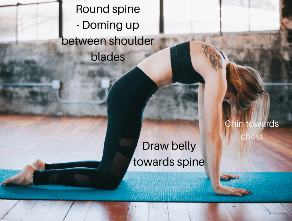 how to do cat pose meme with notes on how to do the yoga pose of bitilasana