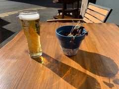 A beer and an oxalis triangularis plant on a table in the sun.