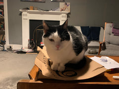 Black and white cat sitting on an old pizza box