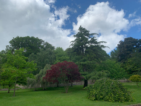 Landscaped trees in a garden