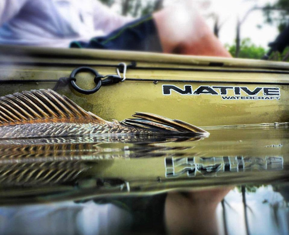 Top of fish sticking up out of water next to a Native Watercraft Ultimate FX 12