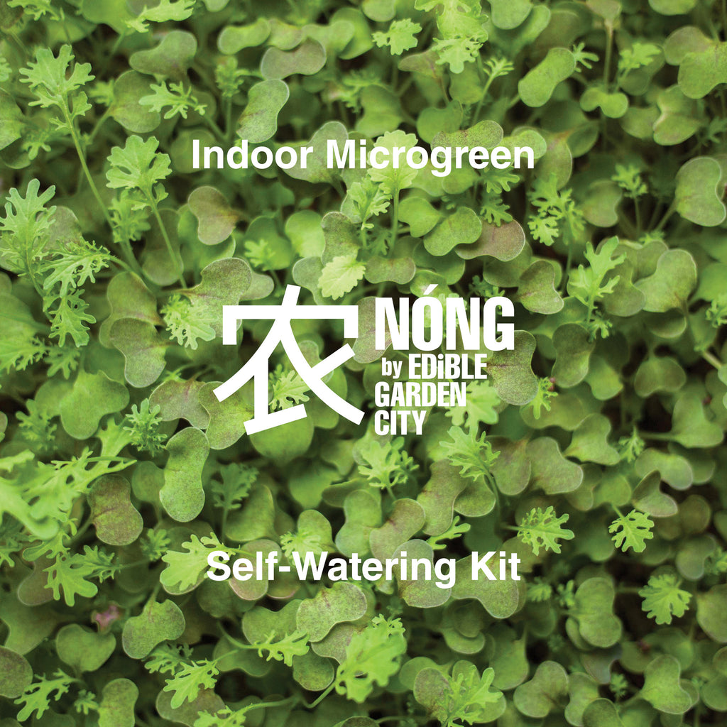 Indoor Microgreen Self-Watering Kit