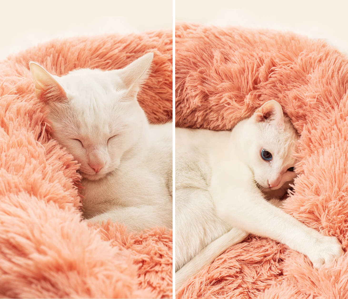 Plush pet bed for cats