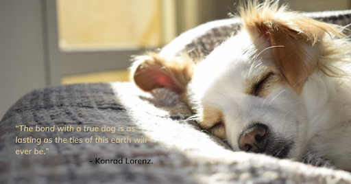 Sweet quotes for dog lovers
