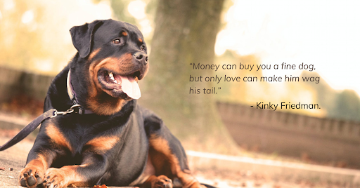 Best Dog Inspired quotes
