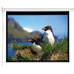 "AccuScreens Electric Projection Screen - 96"" - 4:3"