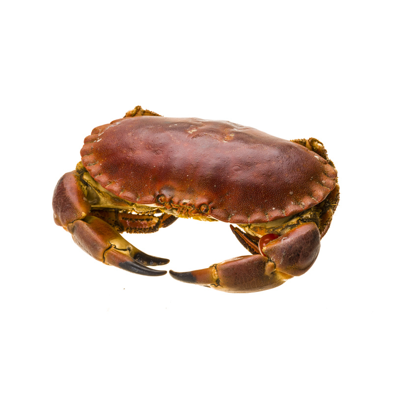 Live Brown Crab - 600g Approx x 2