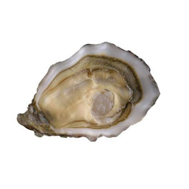 Fresh Oysters Fine De Speciale - 12 Pieces