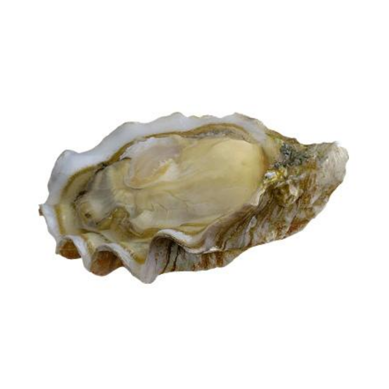 Fresh Oysters BB Boudeuse  - 12 Pieces