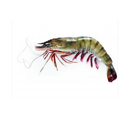 Black Tiger Shrimps Head On Colossal (Frozen) - 1kg