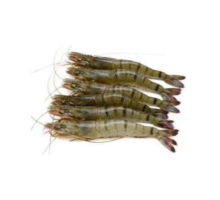 Black Tiger Shrimps Head On Medium (Frozen) - 1kg