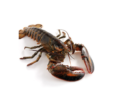 Canadian Lobster (Frozen) - 1.4kg approx