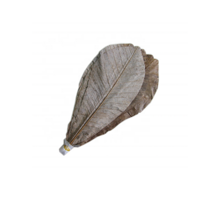 Dried Hoba Leaves - 20 Sheets